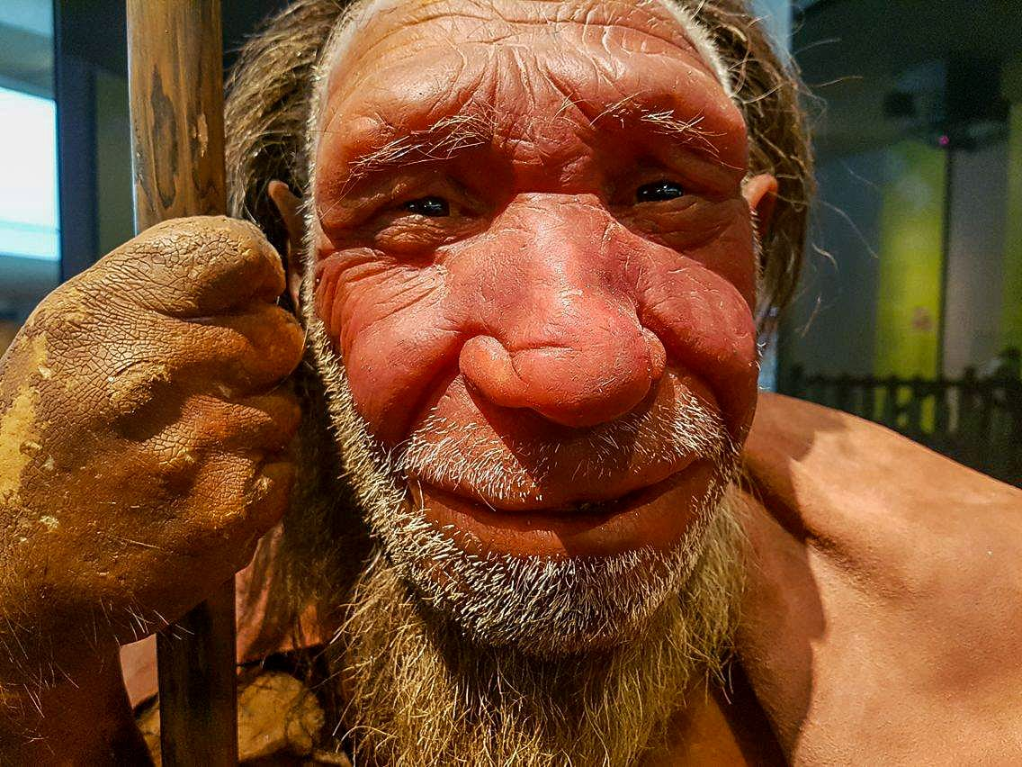 Have You Been to the Neanderthal Museum Yet?