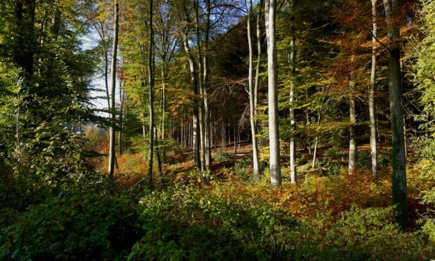 DAY TRIP: The Kettwiger Panoramasteig | A Gorgeous Hike Along The Ruhr