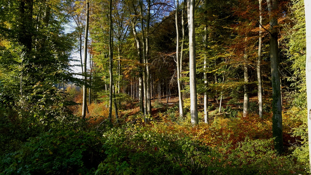 DAY TRIP: The Kettwiger Panoramasteig   A Gorgeous Hike Along The Ruhr