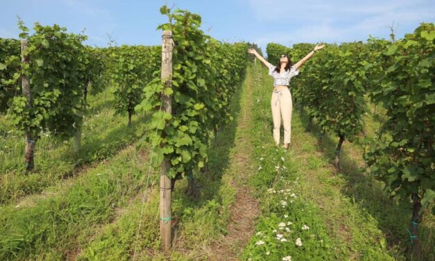 5 of the Best Wine Experiences and Day Trips Just Outside Düsseldorf